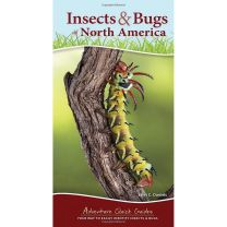 INSECTS & BUGS OF N. AMERICA